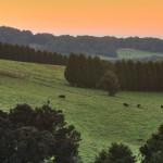Robertson Hills. Credit: Destination Southern Highlands