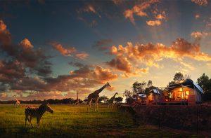 zoofari-lodge-taronga-western-plains-zoo